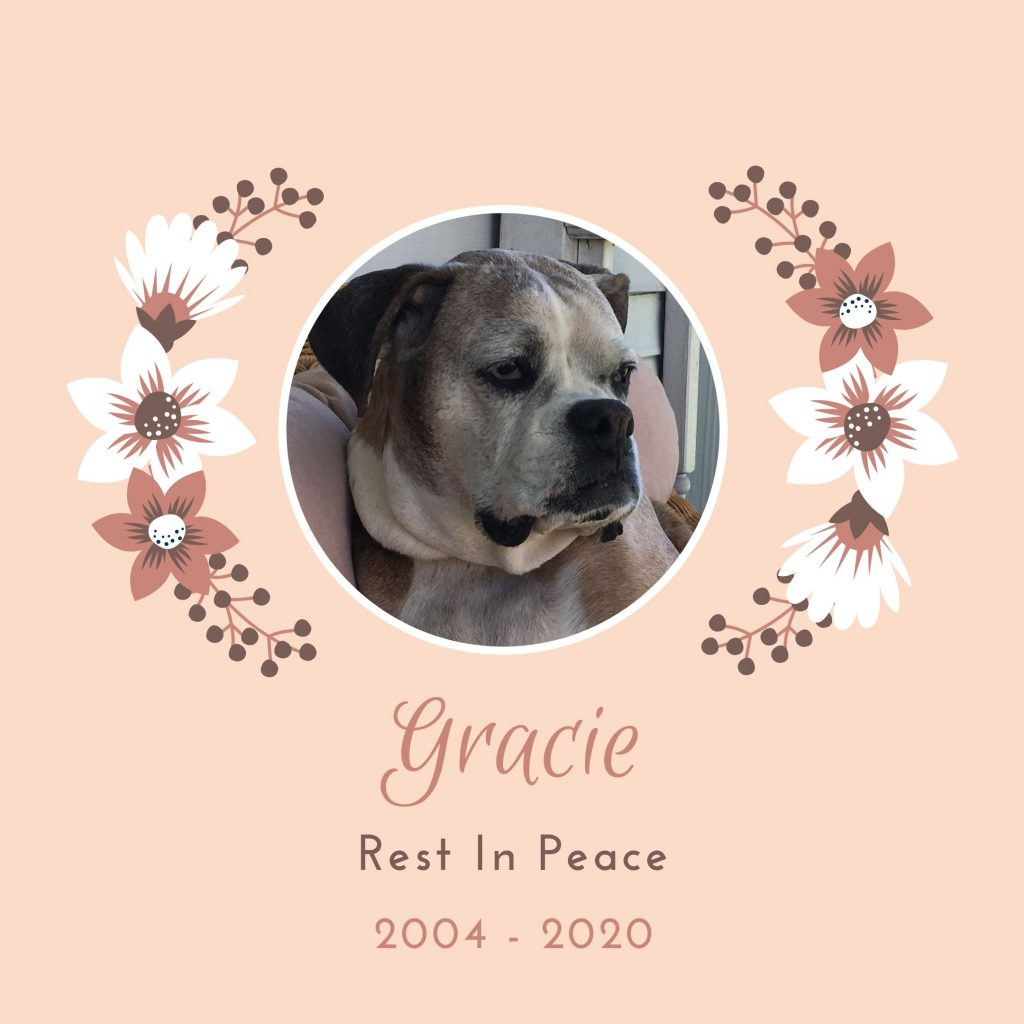 RIP Gracie image